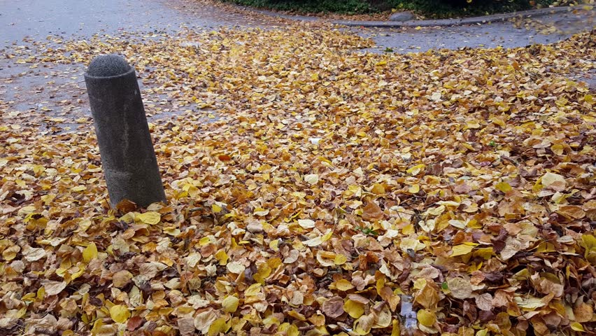 A large number of yellow leaves blowing in air with a leaf blower | Shutterstock HD Video #21755860
