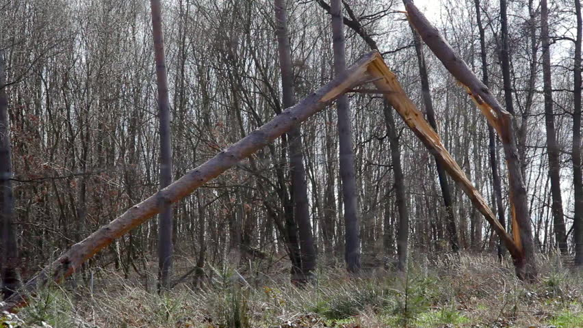 Collapsed broken tree trunk in the forest, Germany | Shutterstock HD Video #21798754