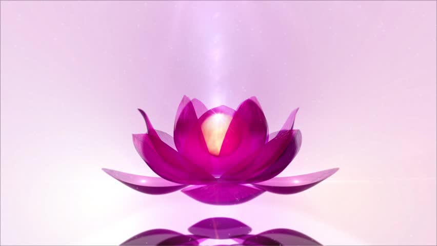 Header of Lotus