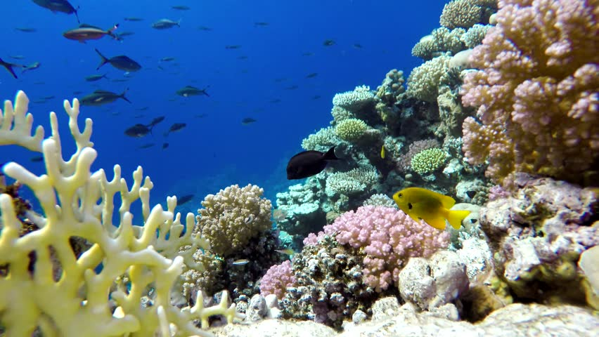 Coral Reef And Beautiful Fish Stock Footage Video 100 Royalty Free 21845404