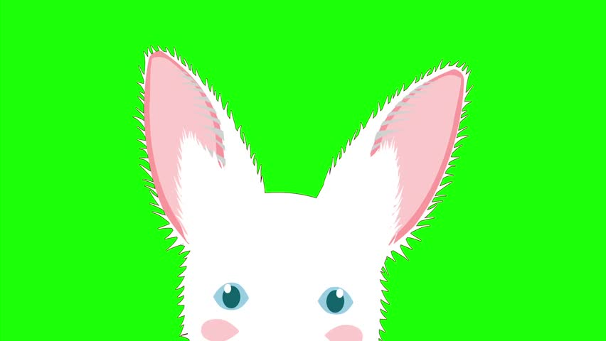 White Rabbit Sneaking. Greeting Card Easter Day. isolated on Green Screen | Shutterstock HD Video #21873214