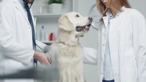 In Veterinary Clinic. Vet and His Assistant Examine the Dog with Stethoscope. In Slow Motion.