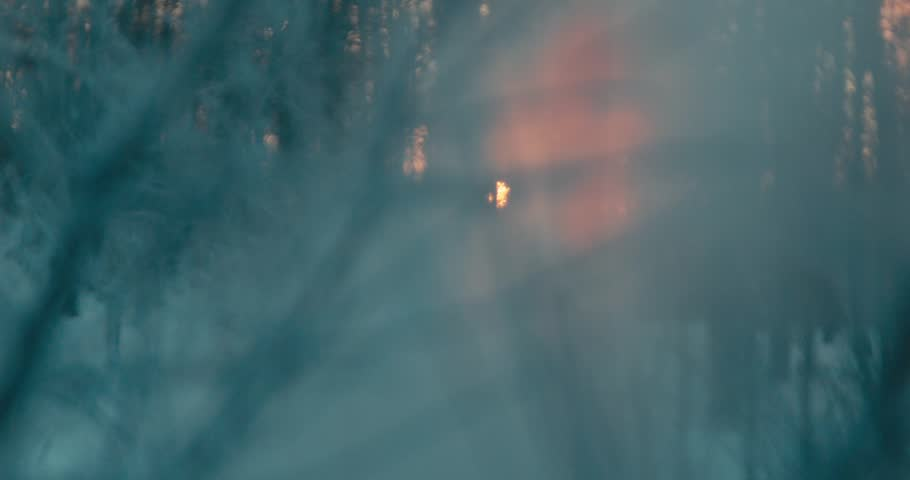 WINTER. Close up trees and fog. Sunset. Blurred frame. Red sun #22221544