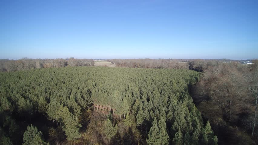 Overflight of a small pine plantation in the Landes   Shutterstock HD Video #22240954