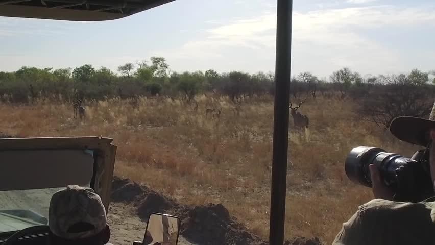 Photographer captures kudu on safari