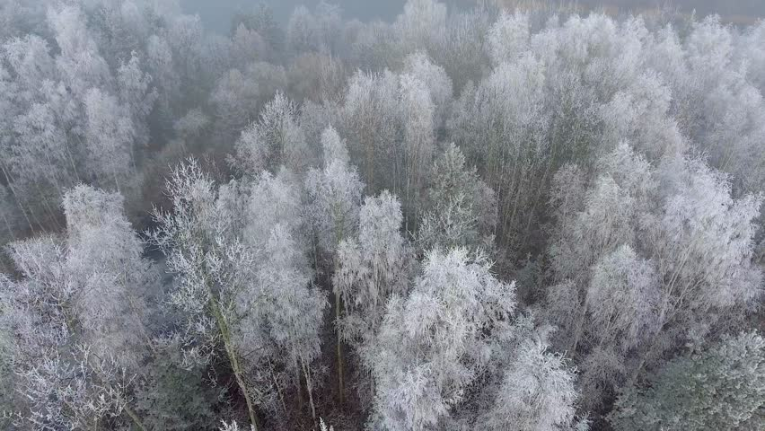 Aerial view of the winter background with a snow-covered forest and lake from above captured with a drone in Poland.   Shutterstock HD Video #22468984