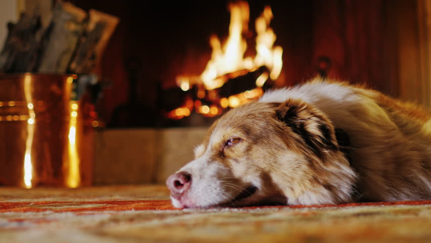 fireplace with animals stock video footage 4k and hd video clips rh shutterstock com Cozy Fire Cozy Fireplace with Dog