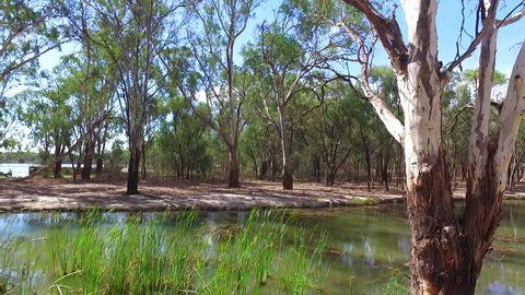 POV from vehicle of dirt track through gum trees along edge of billabong / lagoon on Murray River in Murray darling basin on edge of bushland, mallee and drought affected areas in Australia.