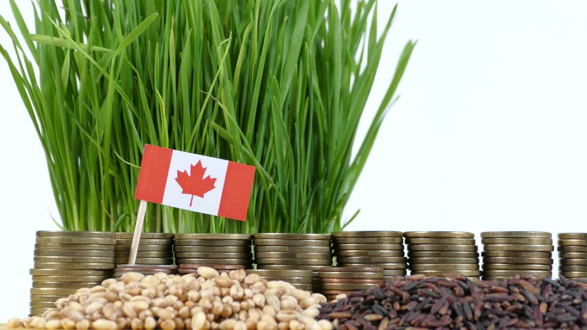Canada flag waving with stack of money coins and piles of wheat and rice seeds | Shutterstock HD Video #22948564