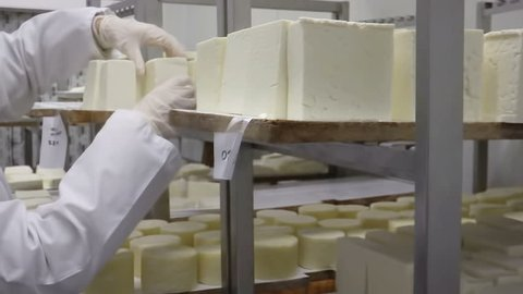 Production of goat cheese ; Worker in a warehouse of cheese turns slices of goat cheese