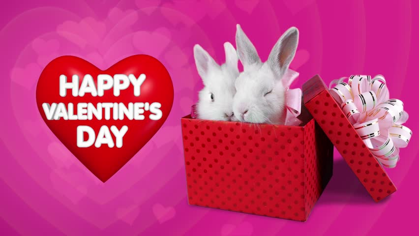 Red gift box with romantic couple of rabbits valentines day sale a funny romantic couple of rabbits sitting in the present box happy valentines day concept negle Images