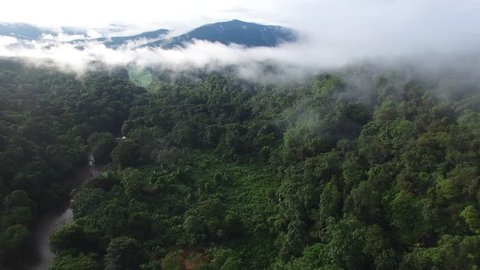 Flying over an amazing rain forest, aerial view above rain forest with fog at sunrise. 4K aerial video, rain forest landscape
