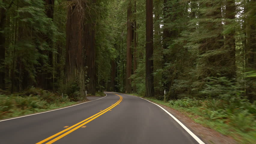 Driving on Avenue of the Giants through Humboldt Redwoods State Park, Northern California.