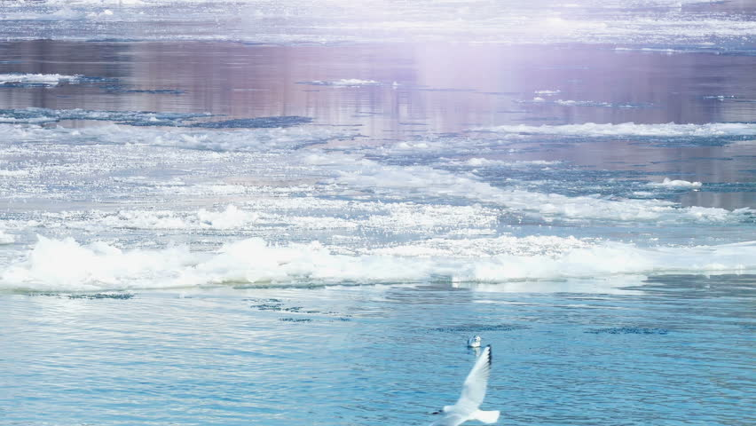 Icebergs floating on the icy water, Frozen River with Icebergs in Winter, 4 K Video Clip | Shutterstock HD Video #23430994
