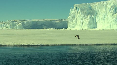 Antarctica - Emperor Penguins