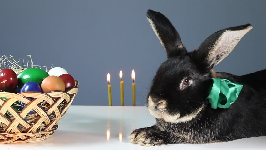 Black rabbit with a colored ribbon around his neck is near the wicker basket with Easter eggs. Burn three candles | Shutterstock HD Video #23564554
