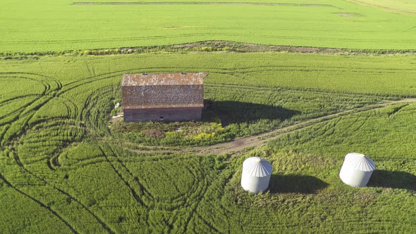 Aerial drone flying around an old abandoned farm barn in the middle of a wheat field in Saskatchewan, Canada. The drone is flying above the barn in an orbit video shot.