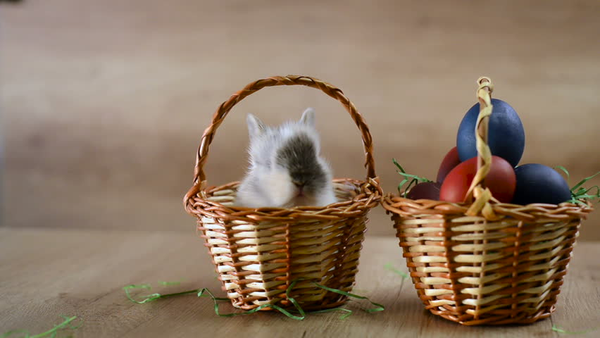 Happy Easter, bunny in a basket