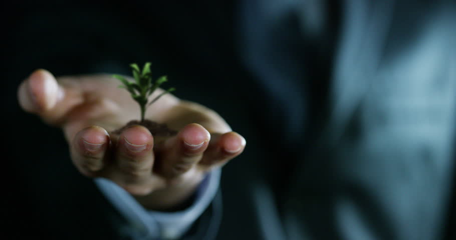 young plant growing in the hands of an experienced seller or bank or insurance broker. concept for investment and passive income for retirement and annuities or remote assistance and connections