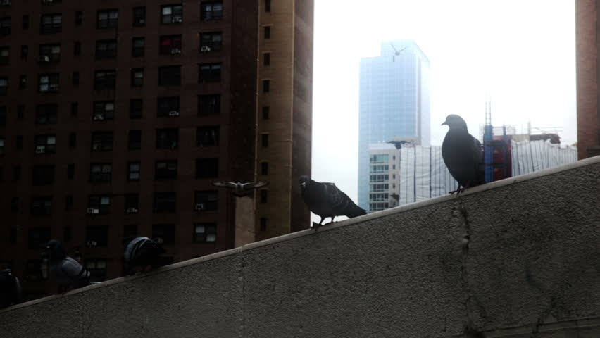 New York City 70s nostalgia brownstone apartment buildings tenement  pigeons landing