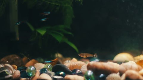 Home Aquarium With A Variety Stock Footage Video 100 Royalty Free