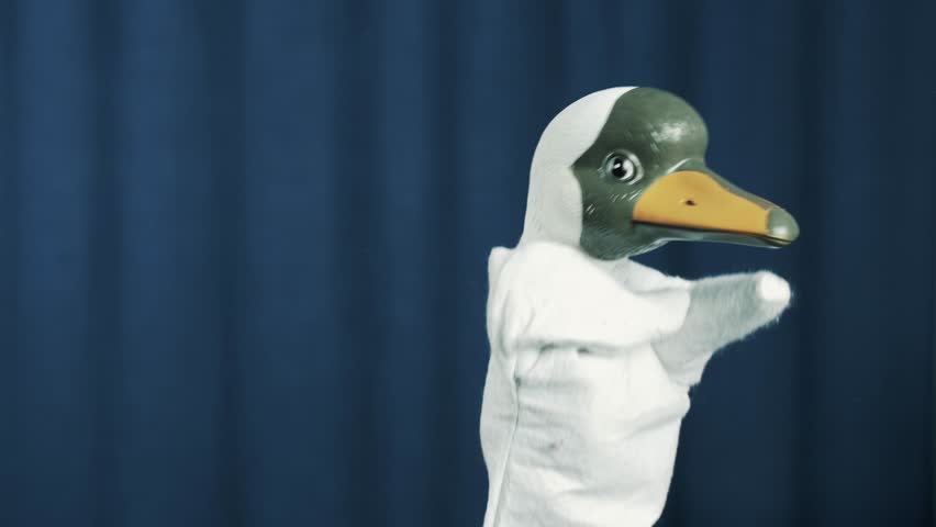 Duck in white hood hand puppet toy appears on scene with blue crease curtains background, greeting audience