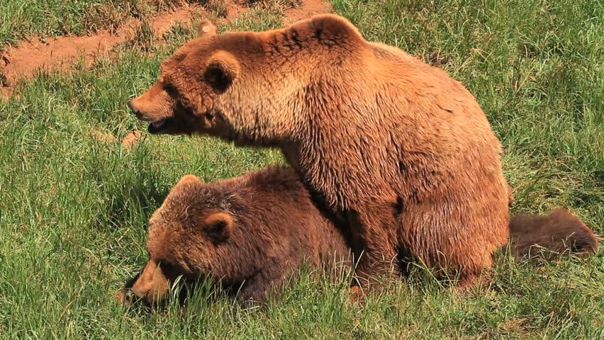 bears #2463134