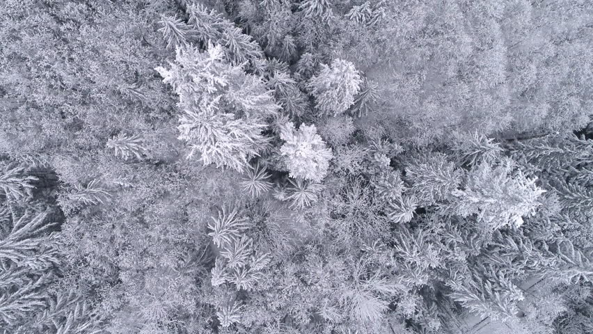 Aerial Background High Above Winter Snow Covered Trees in Cold Mountain Forest