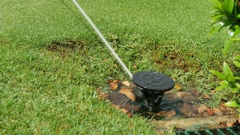 4k.water springer in garden. Springer watering the  grass around