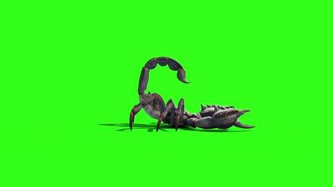 Animal Scorpio Attack Tail Loop Side Green Screen 3D Rendering