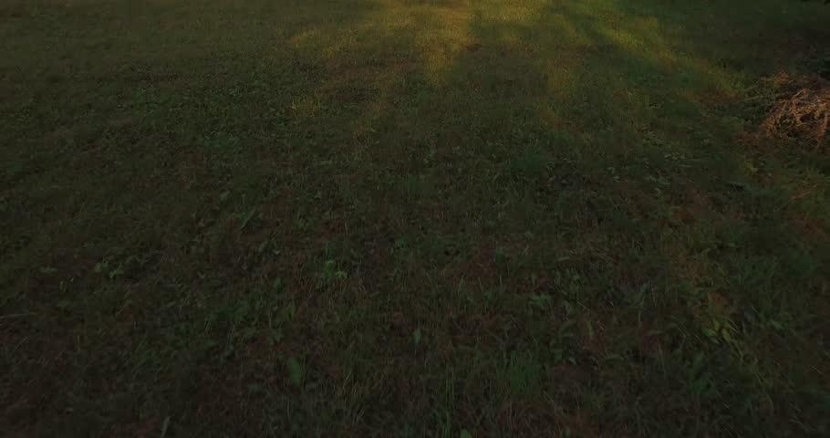 Merveilleux Fresh Grass Texture Pack Openfootage
