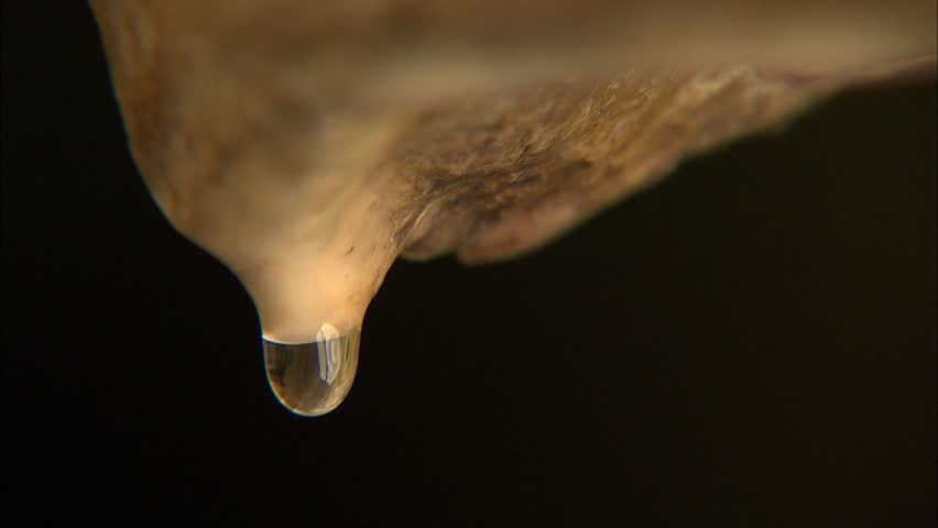 Dripping water from cave stalactite tip against dark background