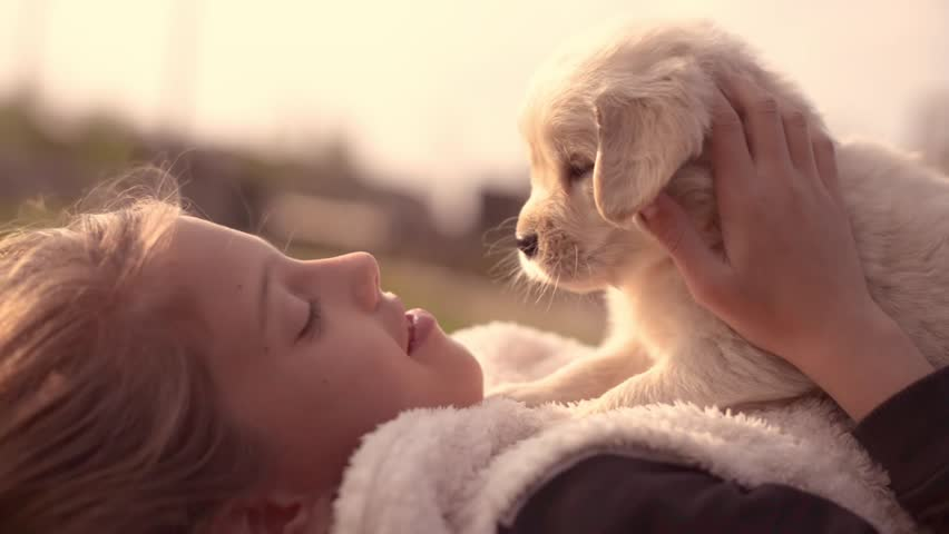 White Golden Retriever Puppy Cuddling Up with Owner Girl Laying on Lawn in Park Outdoors Summer Spring Day Kissing Hugging Petting