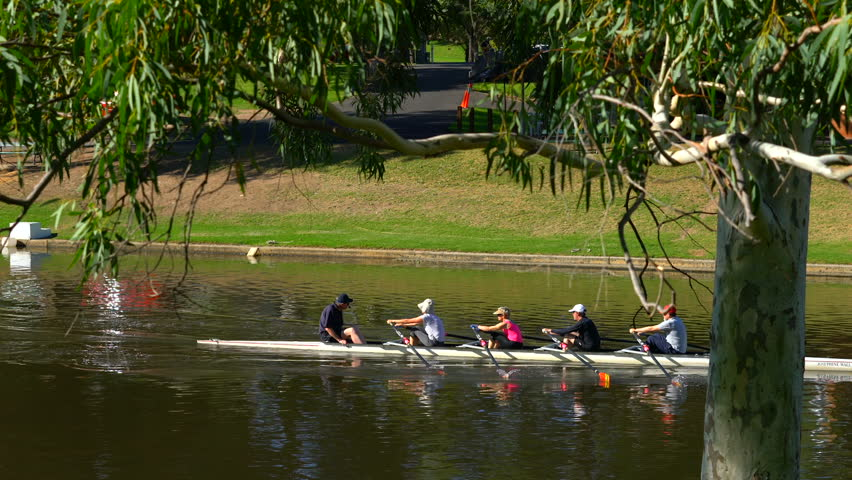 ADELAIDE, SOUTH AUSTRALIA - APRIL 8, 2017: Rowing team practice along the Torrens River, Adelaide North Parklands, close up handheld.