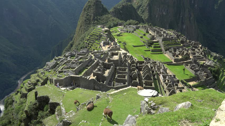 Machu Picchu, the lost city of the Andes with Llama on lawn field as foreground, Machu Picchu located above the Sacred Valley of Cuzco, Machupicchu District, Urubamba Province, Cusco Region, Peru.