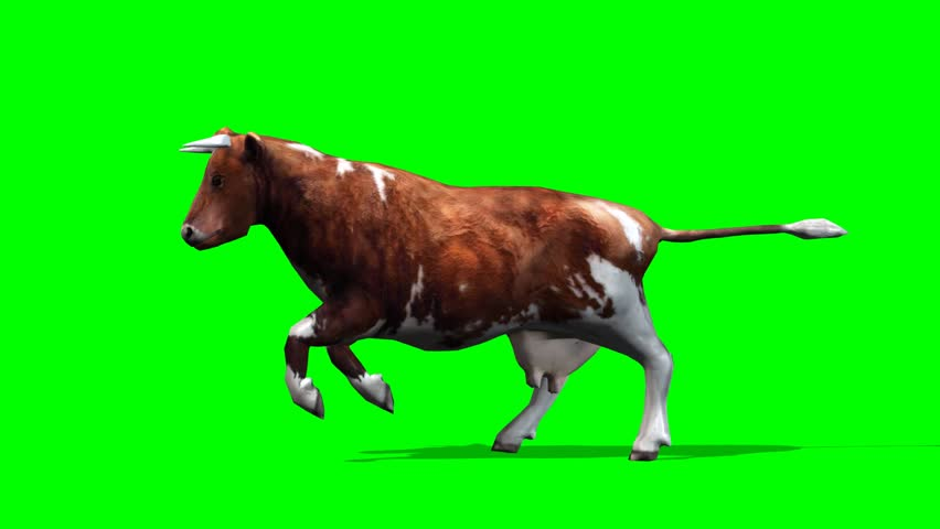cow - brown cow running motion - isolated  green screen