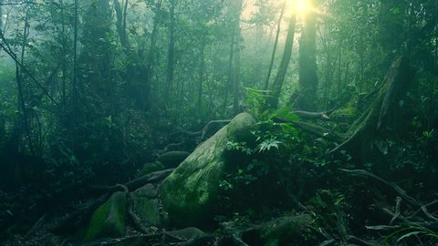 Mystical landscape with mossy stone lying in foggy forest among roots of exotic trees, thicket of shrubs and ferns against sunlight breaking through dense foliage on background. Camera stays still.