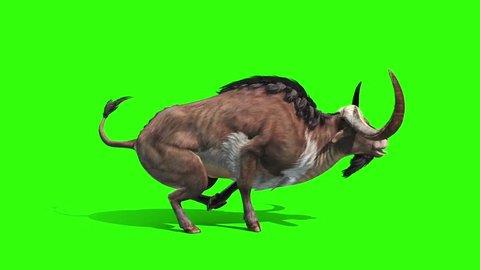 Buffalo Runs Loop Side Animals Horns Green Screen 3D Rendering Animation