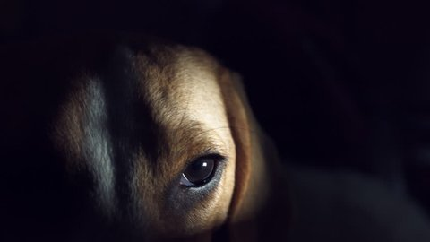 4K Thriller, Horror Animal Dog Eye in Darkness