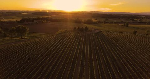 Aerial footage, gorgeous vineyards on sunset in Tuscany, Italy, 4K