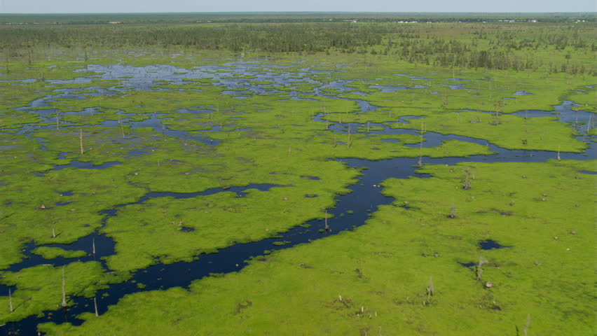 Flight over bright green patches of water plants in a Louisiana bayou