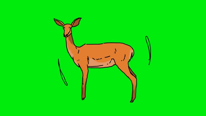 Hand-drawn gazelle on a green screen | Shutterstock HD Video #26681902