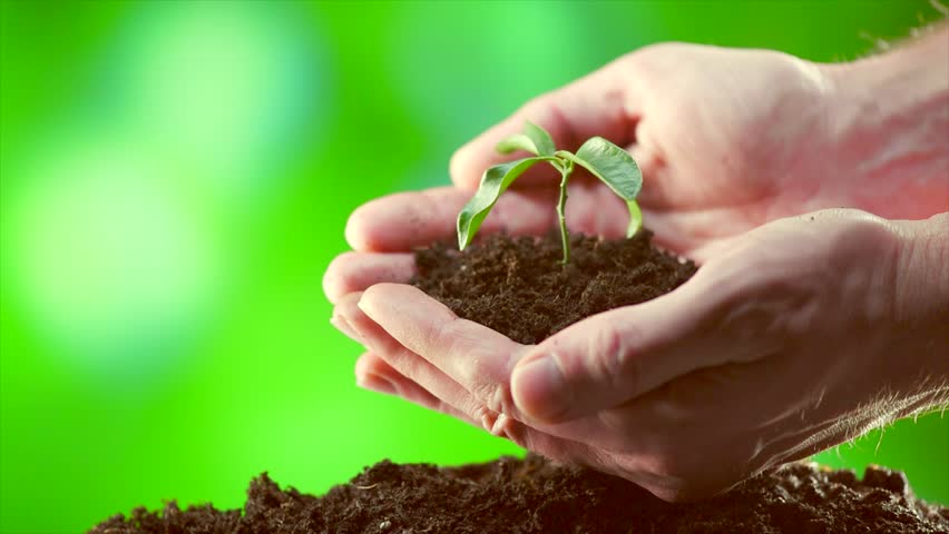 Man's hands planting the seedlings into the soil over nature green sunny background. Ecology, money saving, business concept. Farmer holding baby plant in hands. 4K UHD video 3840X2160.   Shutterstock HD Video #26709394