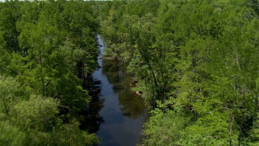 Flying above a rural bayou in Louisiana with birds in flight