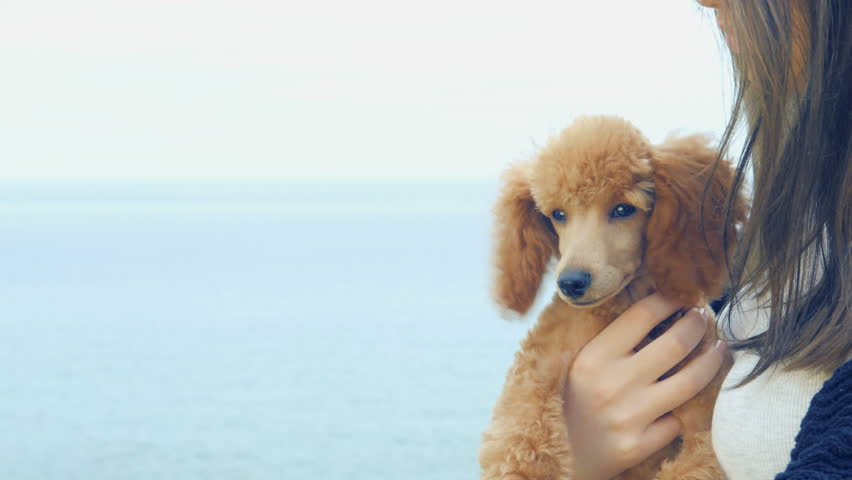 Young girl with her dog outdoors. Positive human emotions. | Shutterstock HD Video #26739124