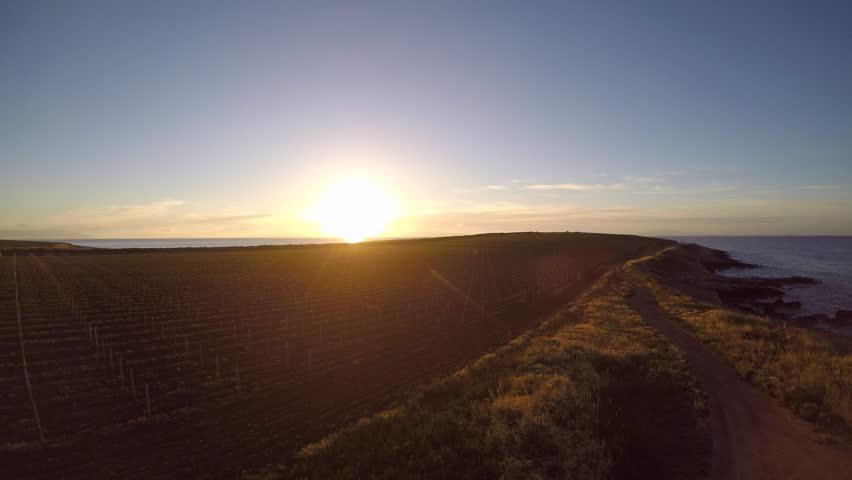 4K Aerial: Golden rising sun shining on the seaside vineyards | Shutterstock HD Video #26762254
