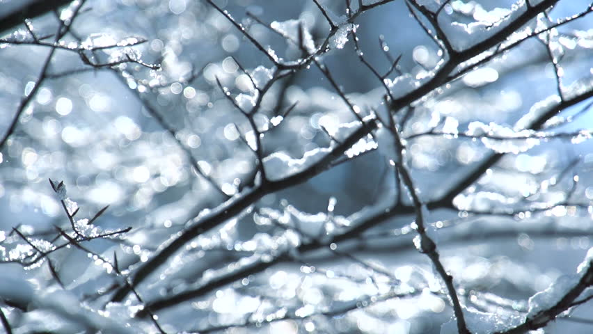 Snow falling on leafless tree branches in slow motion. winter christmas season background | Shutterstock HD Video #26931724