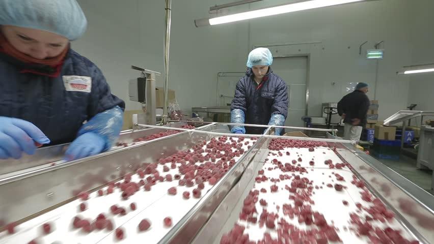VINNITSA, UKRAINE - OCTOBER 2016: Frozen berries in sorting and processing machines