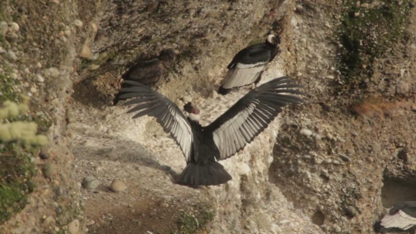 Header of condor