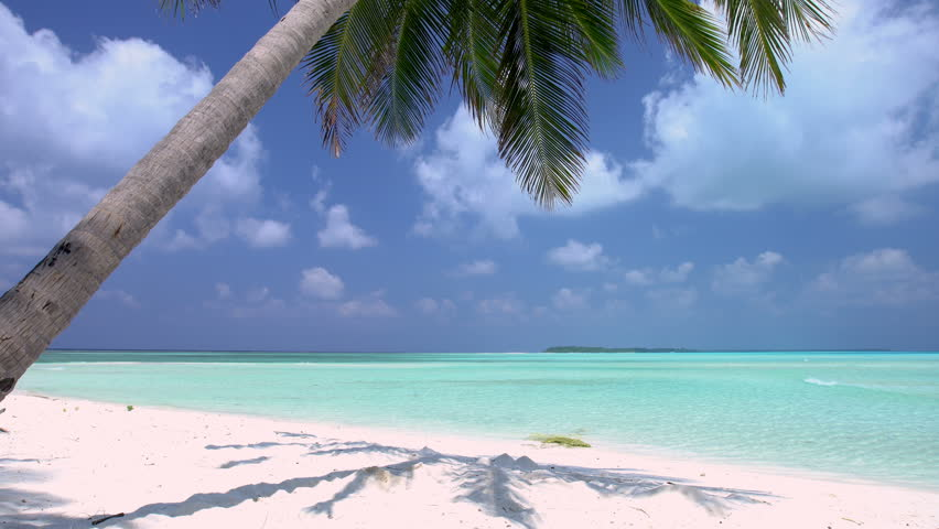 Tropical Island Beach Ambience Sound: Tropical Pristine Beach With Coconut Palm And Turquoise